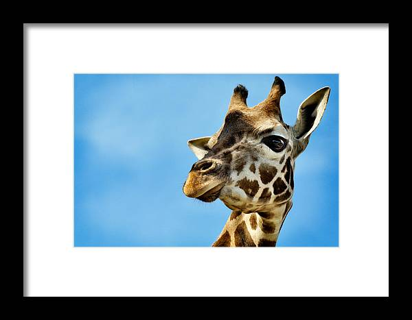 Animal Framed Print featuring the photograph Jovancha by Zoran Buletic