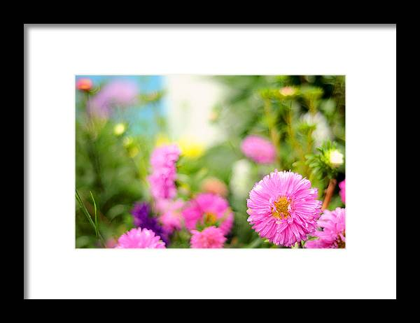 Nature Framed Print featuring the photograph Joy Of Summer Time by Jenny Rainbow