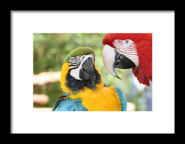 Colors Framed Print featuring the photograph Just Between Friends by Andrea OConnell