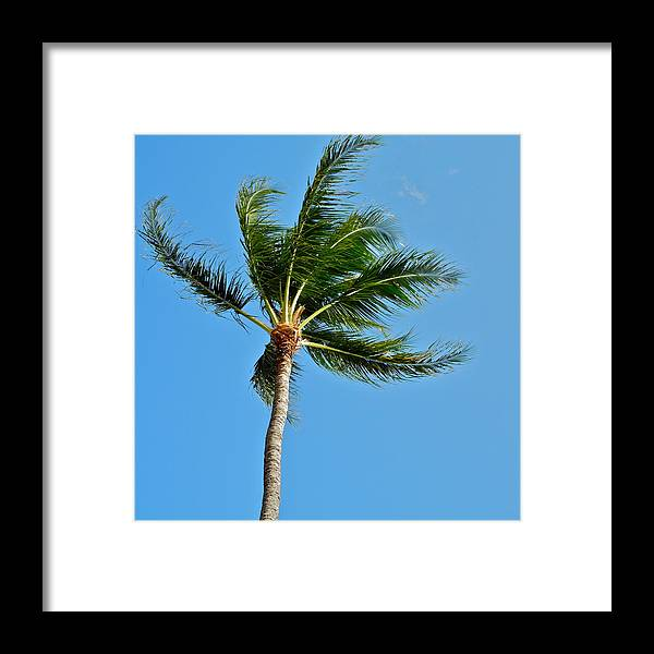 Palm Tree Framed Print featuring the photograph Just Blowing in the Wind by Kirsten Giving