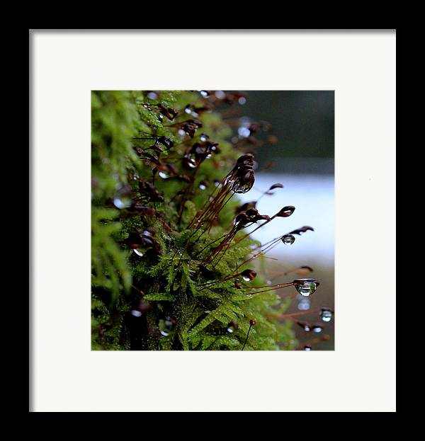 Spring Framed Print featuring the pyrography Keep My Memories by Marica Jukic