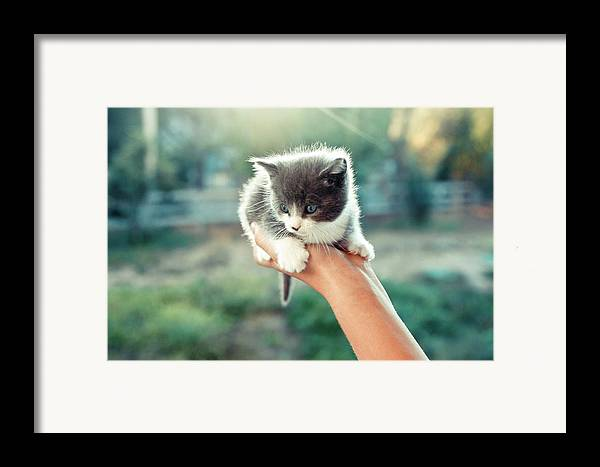 Horizontal Framed Print featuring the photograph Kitten In Hand, 2010 by Emily Golitzin
