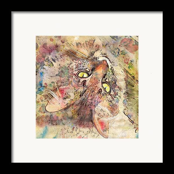 Cats Framed Print featuring the digital art Kitty Fluffs by Marilyn Sholin
