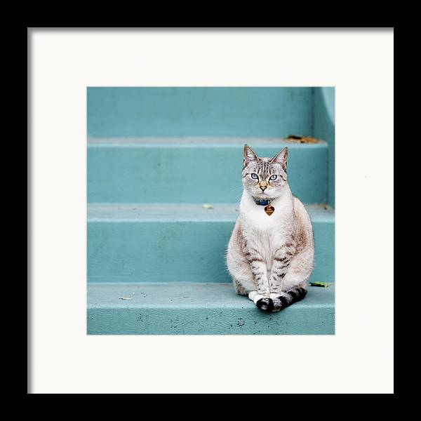 Square Framed Print featuring the photograph Kitty On Blue Steps by Lauren Rosenbaum