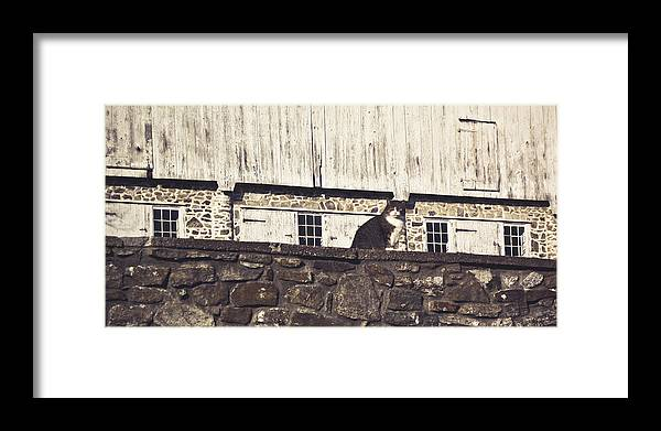 Cat Framed Print featuring the photograph Kitty On Guard by Trish Tritz