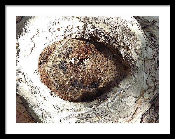 Tree Framed Print featuring the photograph Knot Again by Bruce Borthwick