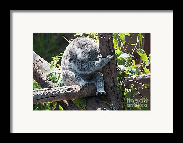 Animals Framed Print featuring the digital art Koala by Carol Ailles
