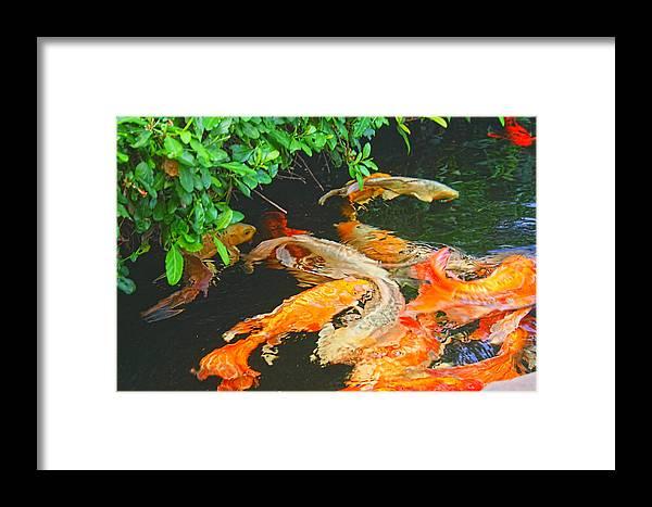 Art Photography Framed Print featuring the photograph Koi Joy by Christiane Kingsley