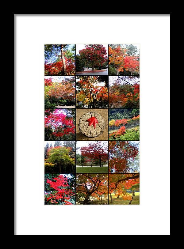 Koyo Framed Print featuring the photograph Koyo Koyo Koyo by Roberto Alamino