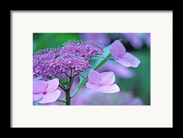 Becky Framed Print featuring the photograph Lace by Becky Lodes