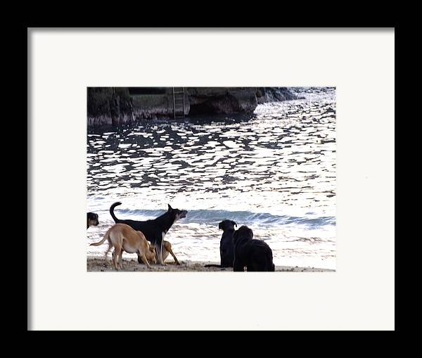 Perros Framed Print featuring the photograph Ladridos De Mar by Karin Cortez
