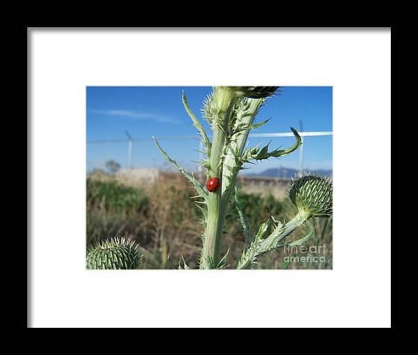 Colorado Framed Print featuring the photograph lady Bugged Colorado by Jack Norton