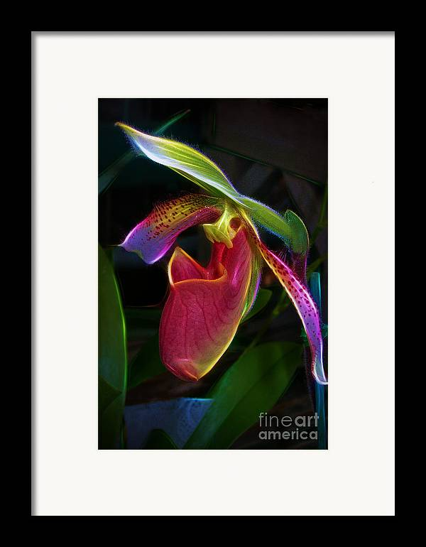 Paphipedelium Framed Print featuring the photograph Lady's Slipper by Judi Bagwell