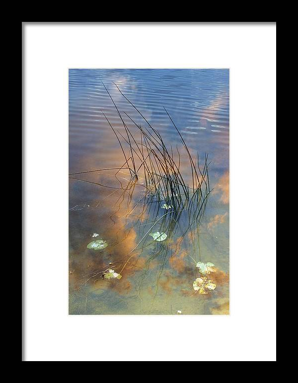 Plant Framed Print featuring the photograph Lakeside Reeds by Tony Craddock
