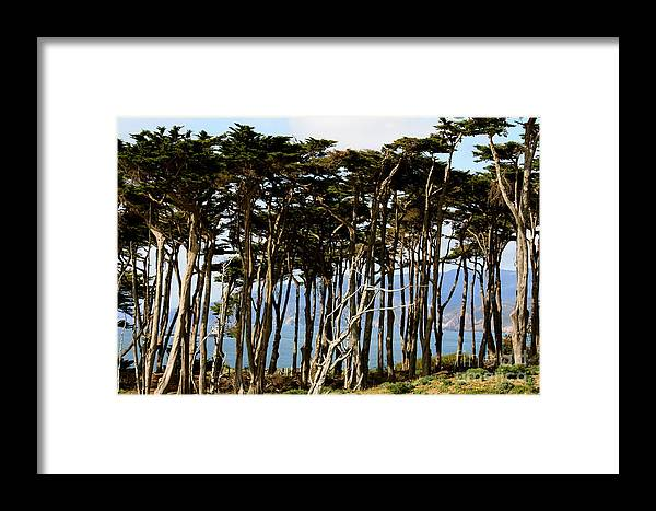 Trees Framed Print featuring the photograph Lands End Trees by Polly Villatuya