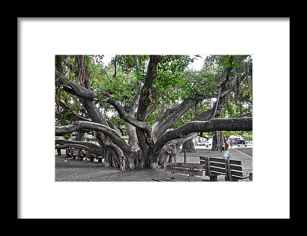 Banyan Tree Framed Print featuring the photograph Largest Banyan Tree in the USA by Kirsten Giving