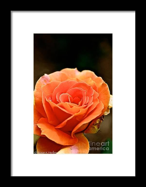 Garden Framed Print featuring the photograph Last Drop by Susan Herber