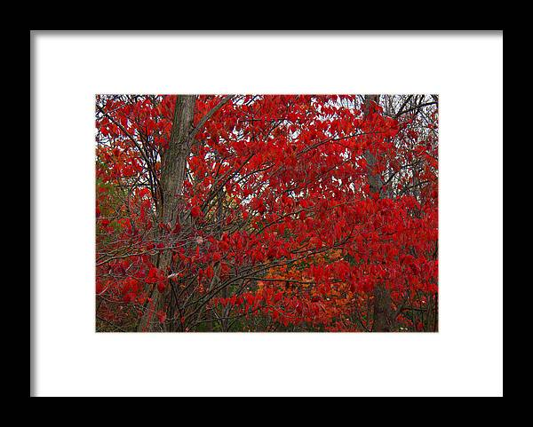 Last Gasp Framed Print featuring the photograph Last Gasp by Ed Smith