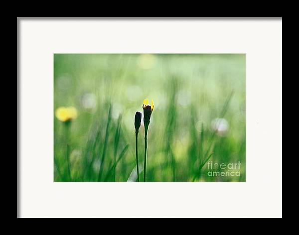 Green Framed Print featuring the photograph Le Centre De L Attention - Green S0101 by Variance Collections