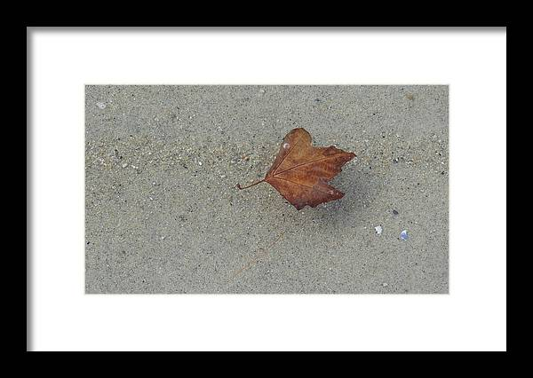 Leaf Framed Print featuring the photograph Leaf Afloat by Jessica Cruz