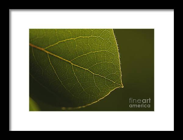 Macro Framed Print featuring the photograph Leaf by Erin Hensley