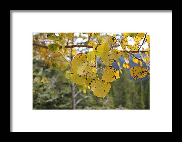 Fall Framed Print featuring the photograph Leaf Flower by Tricia Janush