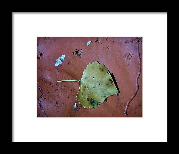 Leaf Framed Print featuring the photograph Leaf Libretto by Britt Runyon