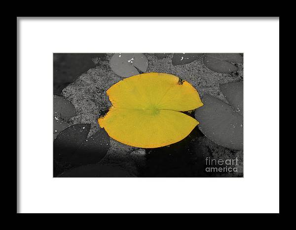 Fine Art Framed Print featuring the photograph Leaf On A Pond II by Donna Greene