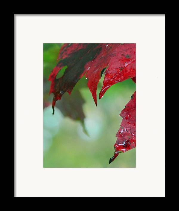 Shadow Framed Print featuring the photograph Leaf Shadows by Mandi Howard