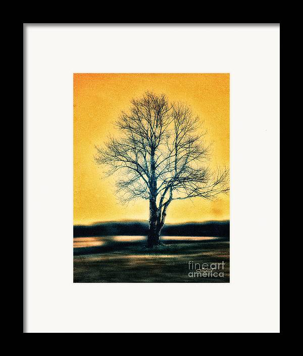 Photo Framed Print featuring the photograph Leafless Tree by Jutta Maria Pusl