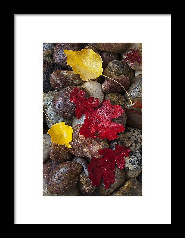 Red Framed Print featuring the photograph Leafs And Stones by Garry Gay