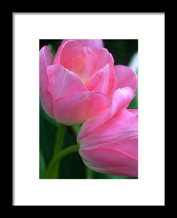 Floral Framed Print featuring the photograph Lean On Me by Kathy Yates