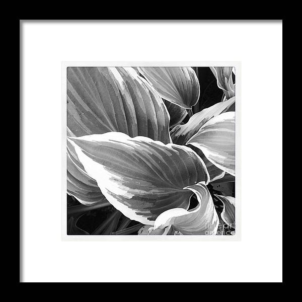 Black And White Framed Print featuring the photograph Leaves 1 by Susan Wood