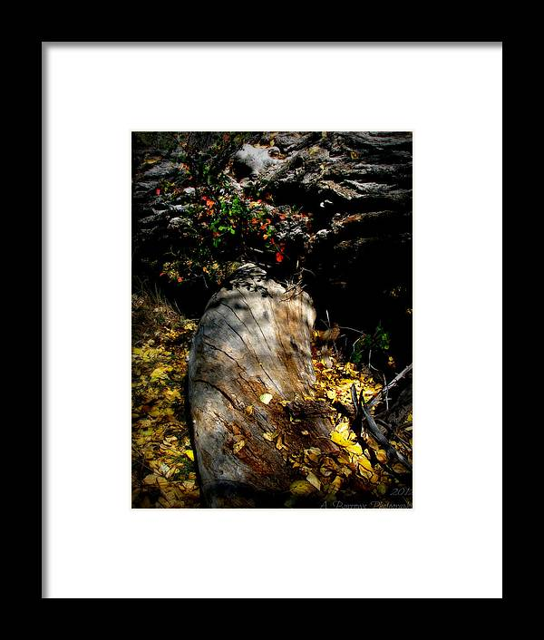 Prescott National Forest Framed Print featuring the photograph Leaves Around The Tree Trunks by Aaron Burrows