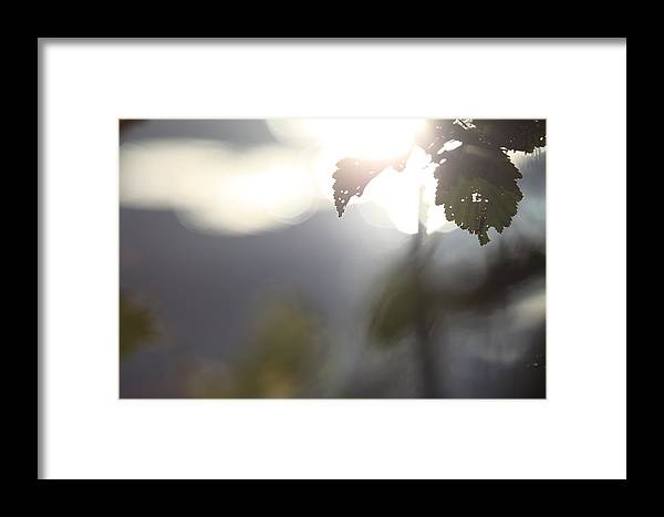 Plant Framed Print featuring the photograph Leaves In Front Of A Lake by Ulrich Kunst And Bettina Scheidulin