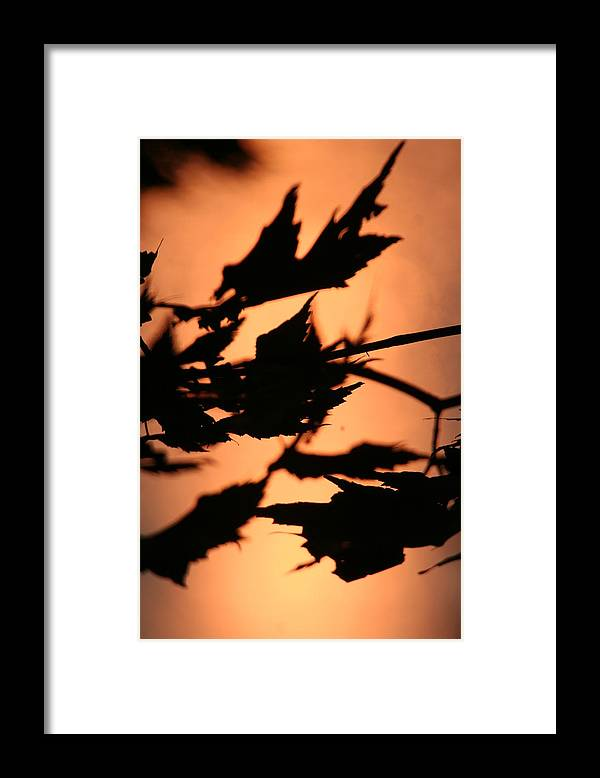 Sunset Framed Print featuring the photograph Leaves in Sunset by Dr Carolyn Reinhart