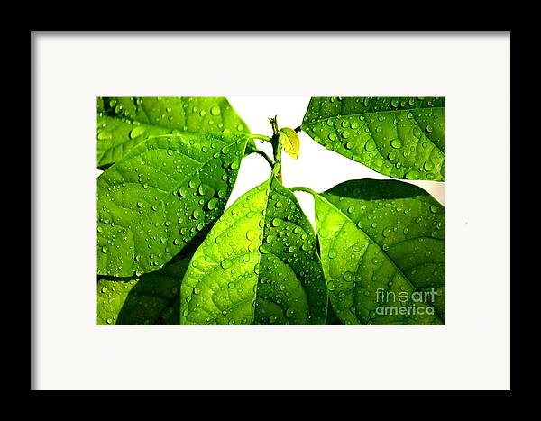 Raindrops Framed Print featuring the photograph Leaves With Raindrops by Theresa Willingham