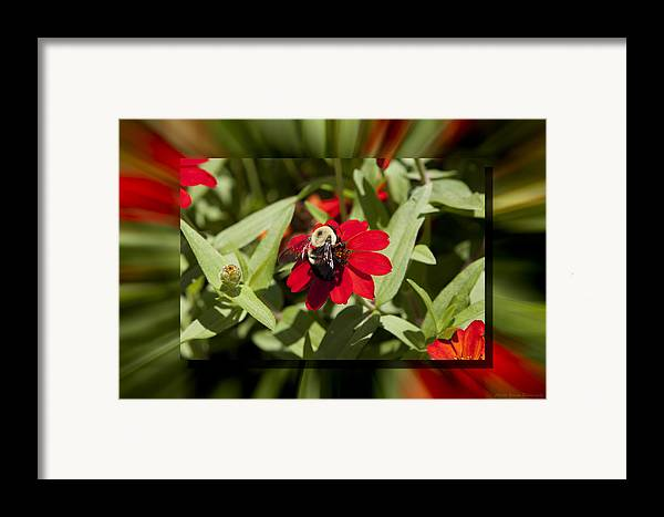 Flower Framed Print featuring the photograph Let It Bee by Charles Warren