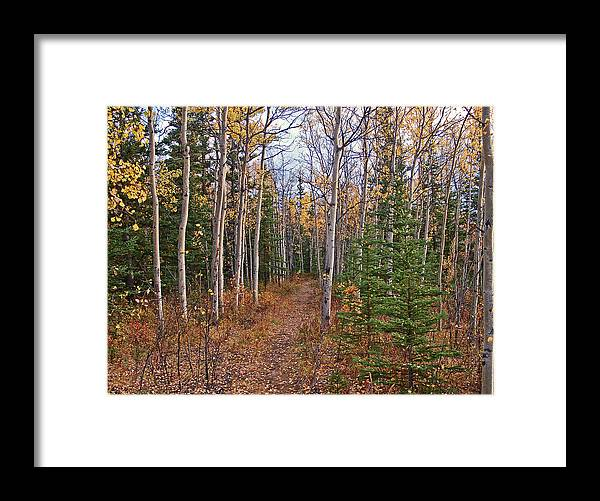 Nature Framed Print featuring the photograph Lets See Where It Leads by Jim and Kim Shivers