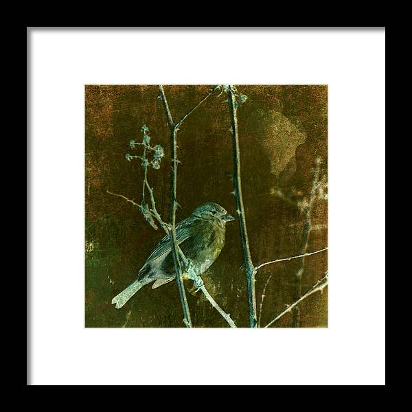 Altered Photo Framed Print featuring the photograph Lifesong by Bonnie Bruno
