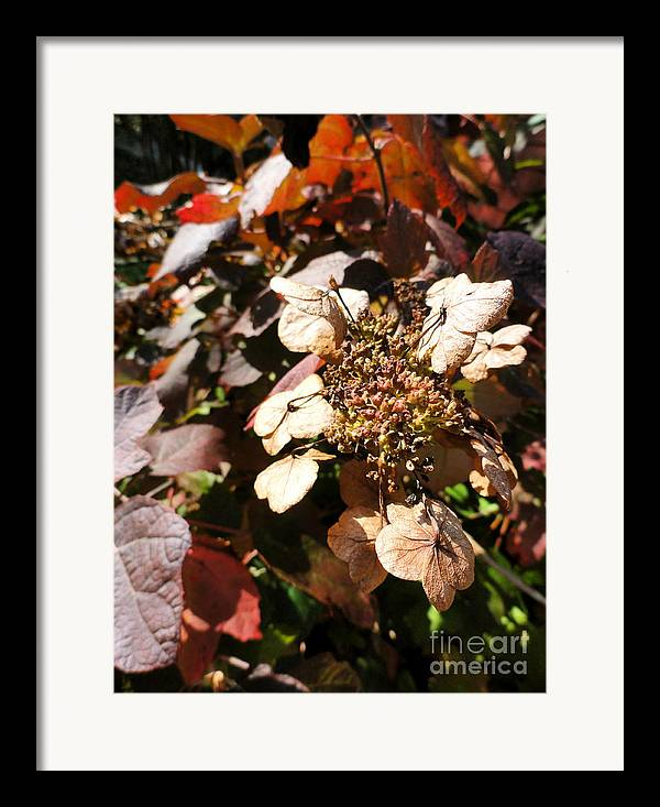 Leaves Framed Print featuring the photograph Light As Paper by Trish Hale