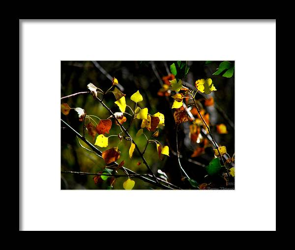 Prescott National Forest Framed Print featuring the photograph Light On The Leaves by Aaron Burrows