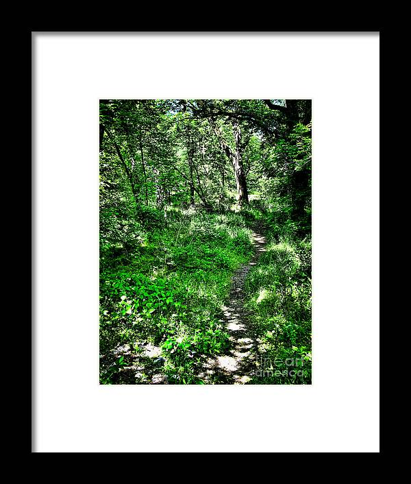 Path Framed Print featuring the photograph Lighted Path by Colleen Kammerer