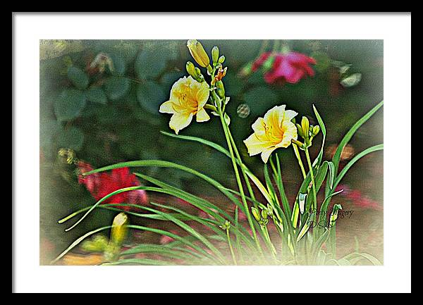 Flowers Framed Print featuring the photograph Lilies And Roses by Debbie Sikes