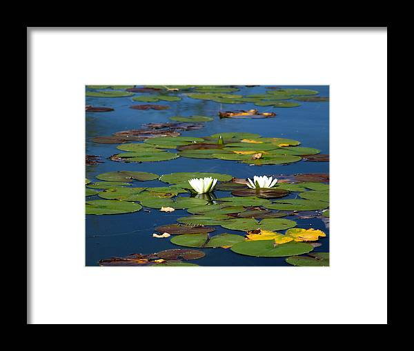 Water Framed Print featuring the photograph Lilies by Jerilyn Skyface Flowers