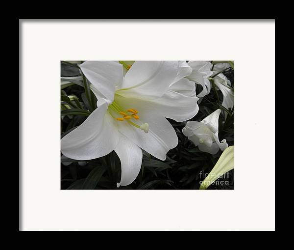 Flower Framed Print featuring the photograph Lilies by Silvie Kendall