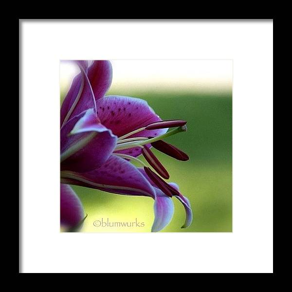 Igsg Framed Print featuring the photograph Lily by Matthew Blum