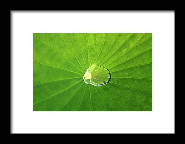 Background Framed Print featuring the photograph Lily Pad by Emanuel Tanjala
