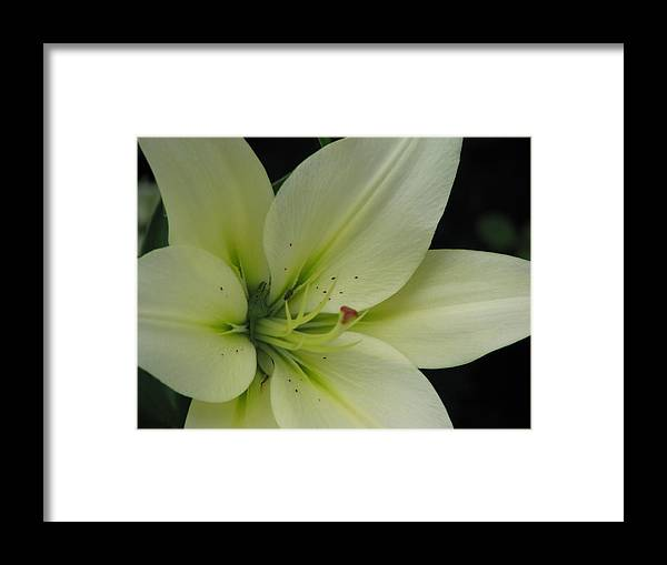 Lily Framed Print featuring the painting Lily by Suzanne Buckland
