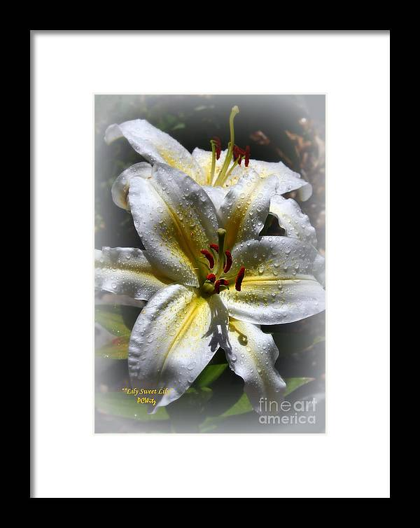 Lily Sweet Lily Framed Print featuring the photograph Lily Sweet Lily by Patrick Witz